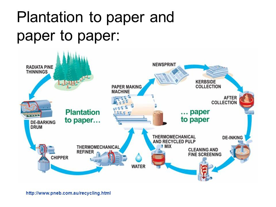 Plantation to paper and paper to paper: