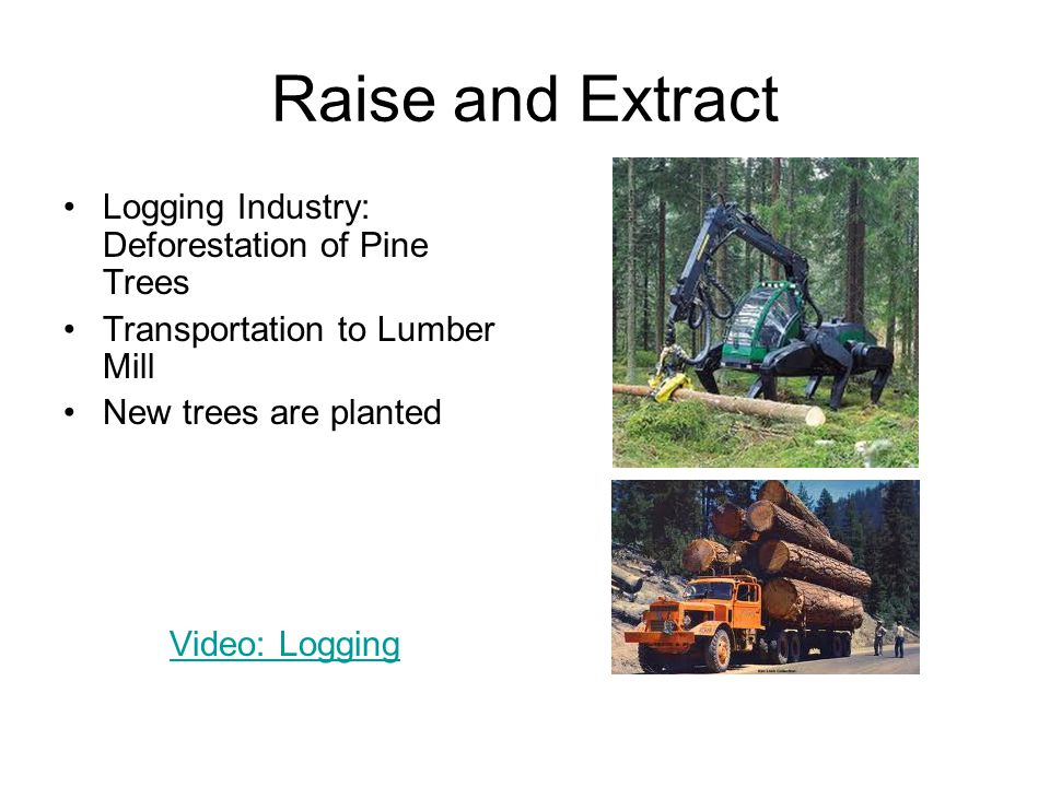 Raise and Extract Logging Industry: Deforestation of Pine Trees