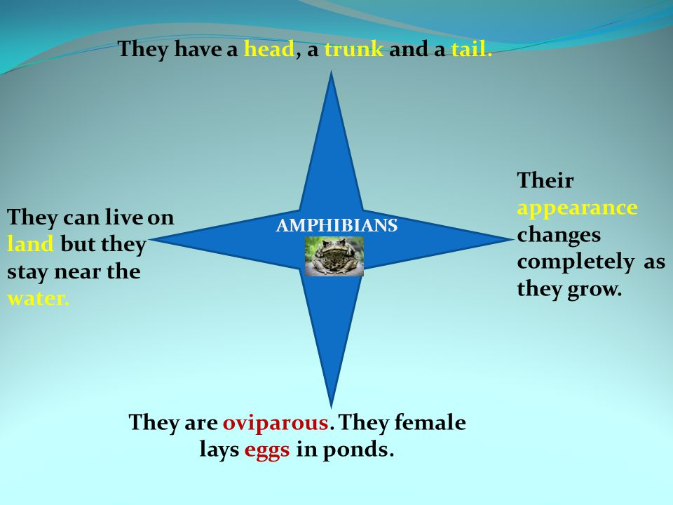 They are oviparous. They female lays eggs in ponds.