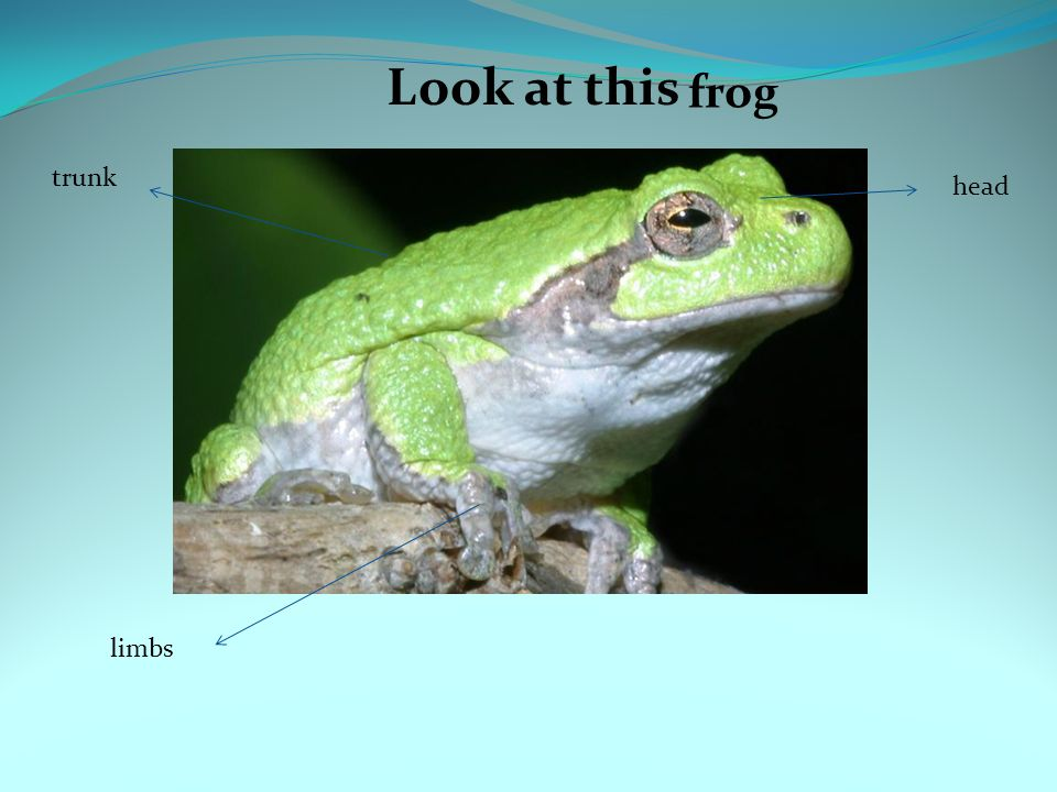 Look at this frog trunk head limbs