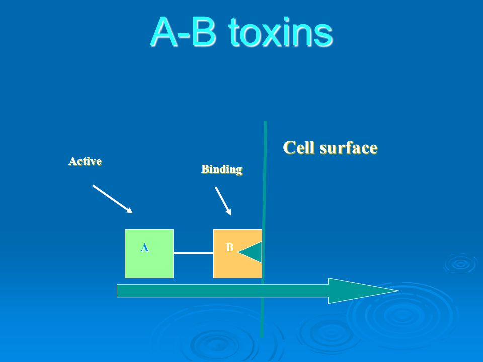 A-B toxins Cell surface Active Binding A B