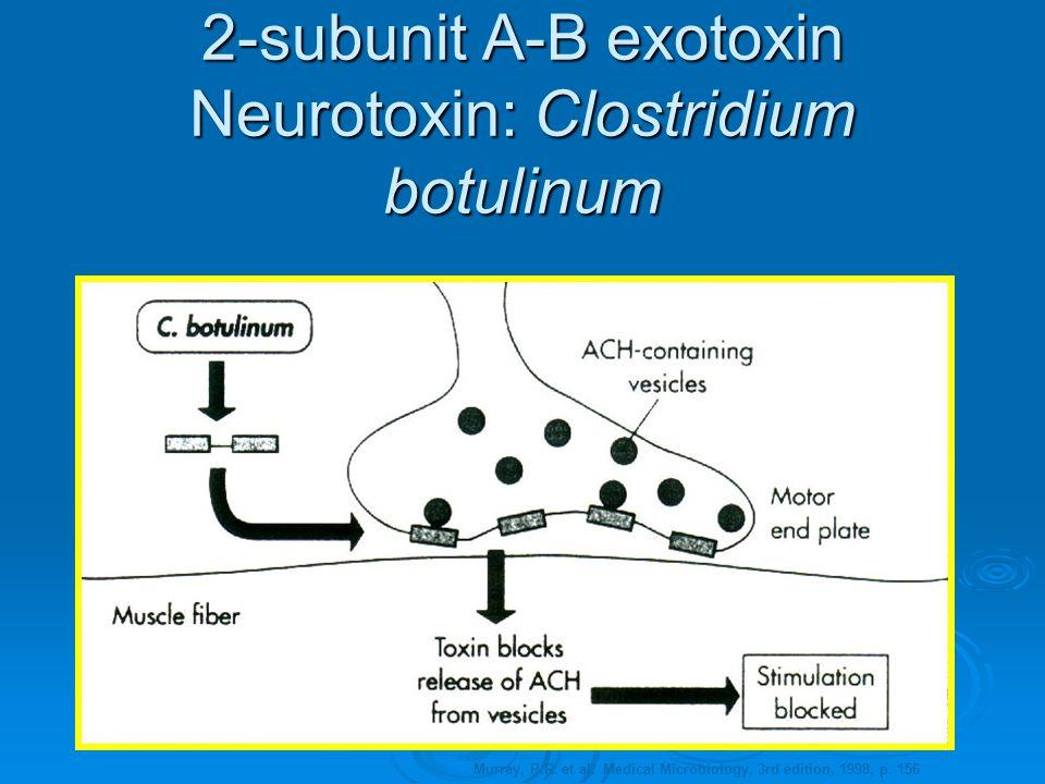 2-subunit A-B exotoxin Neurotoxin: Clostridium botulinum