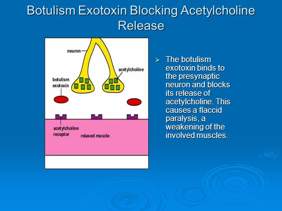 Botulism Exotoxin Blocking Acetylcholine Release