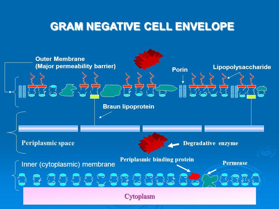 Periplasmic binding protein
