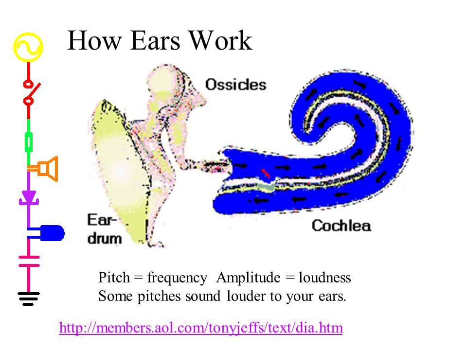 How Ears Work How Ears Work. * If we hook an AC signal to a speaker, we can hear it. * The human ear can distinguish loudness and pitch.