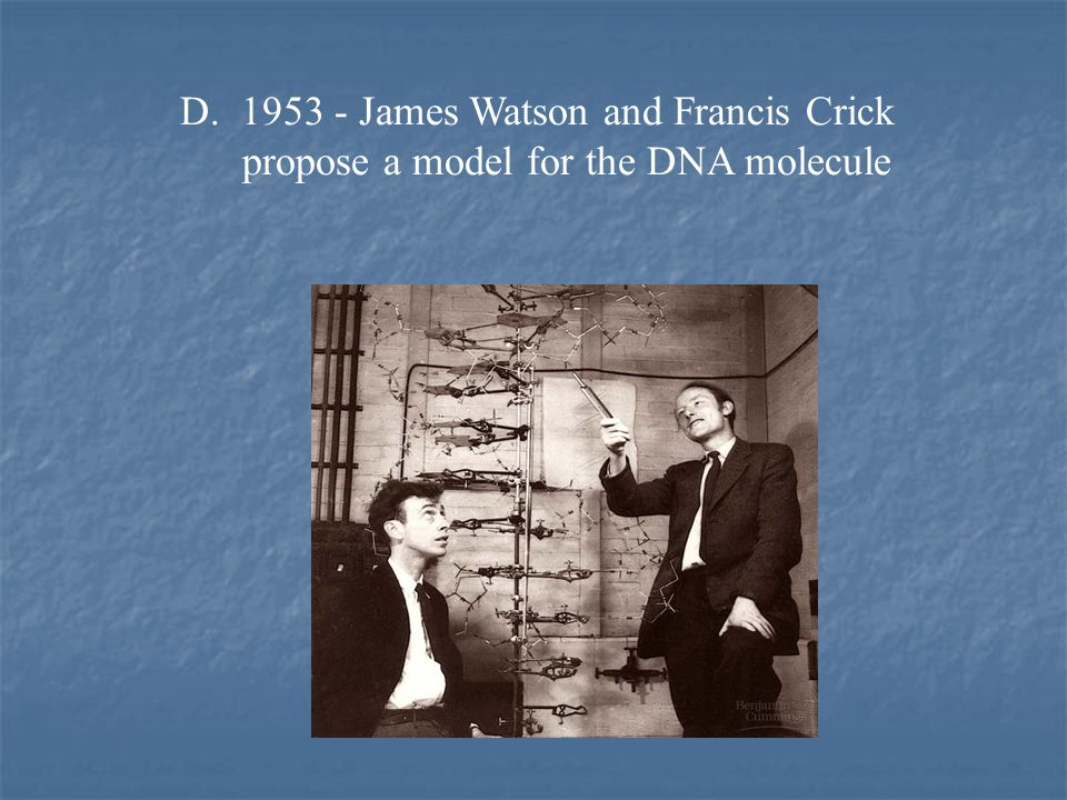 D. 1953 - James Watson and Francis Crick propose a model for the DNA molecule