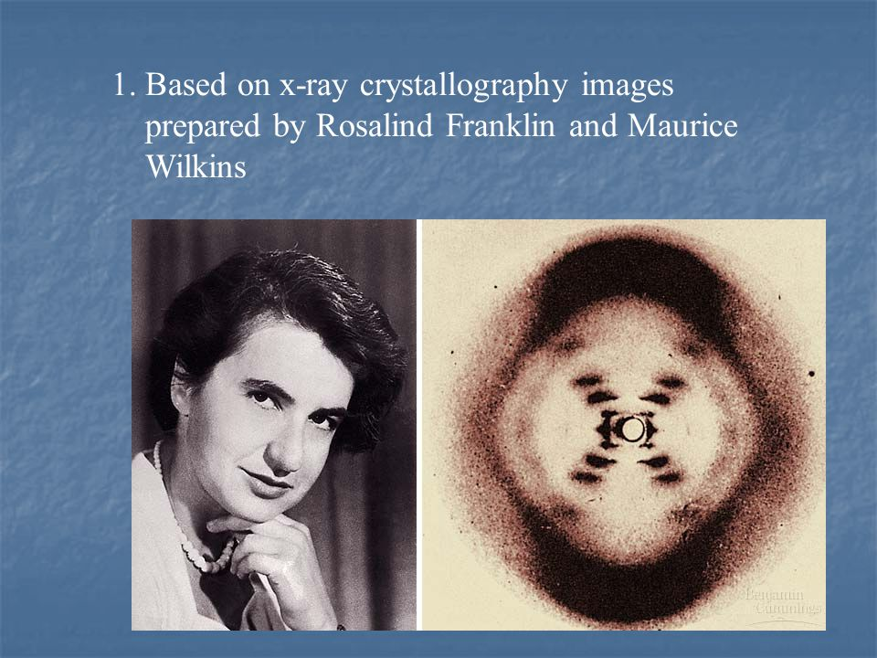 1. Based on x-ray crystallography images prepared by Rosalind Franklin and Maurice Wilkins