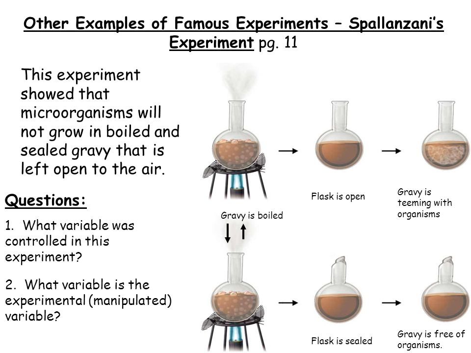 Other Examples of Famous Experiments – Spallanzani's Experiment pg. 11