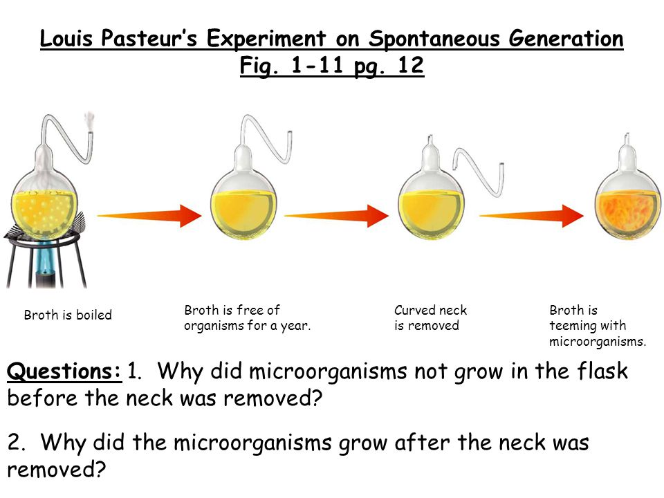 Louis Pasteur's Experiment on Spontaneous Generation Fig. 1-11 pg. 12