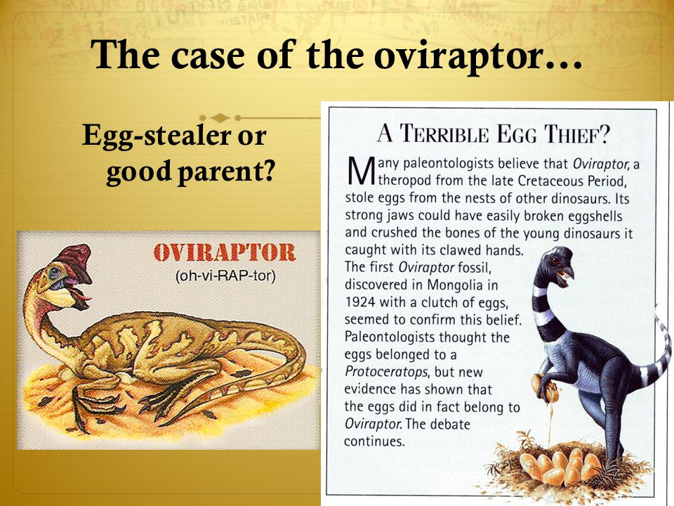 The case of the oviraptor…