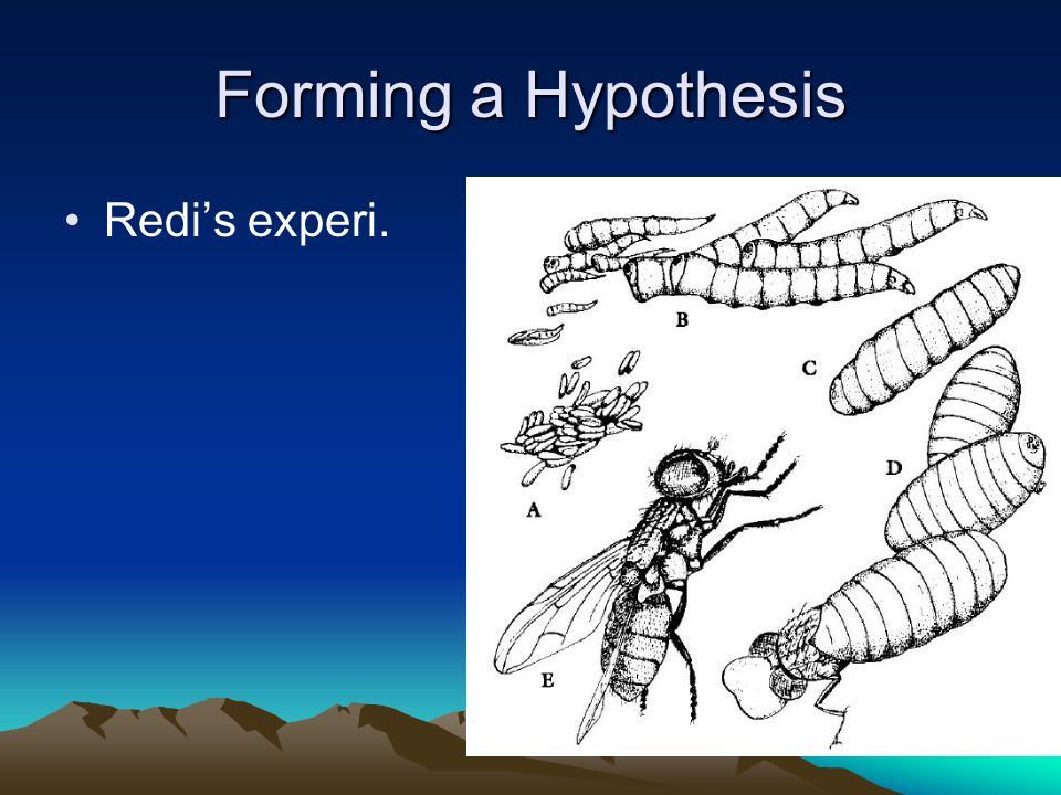 Forming a Hypothesis Redi's experi.