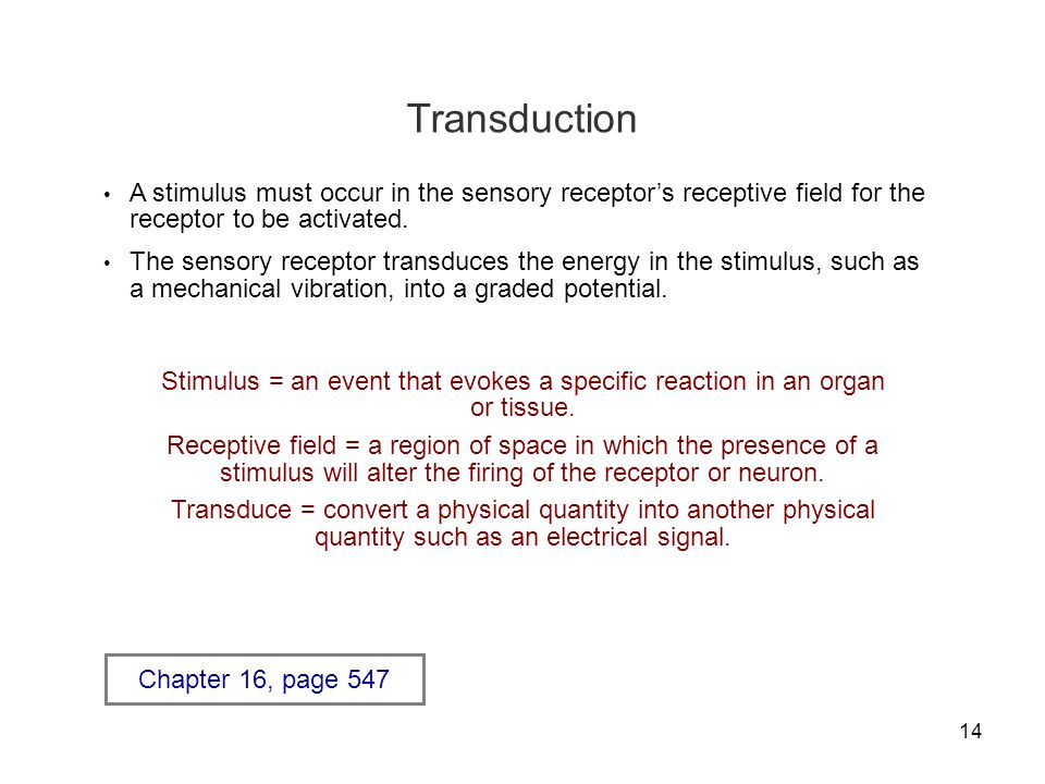 Transduction A stimulus must occur in the sensory receptor's receptive field for the receptor to be activated.