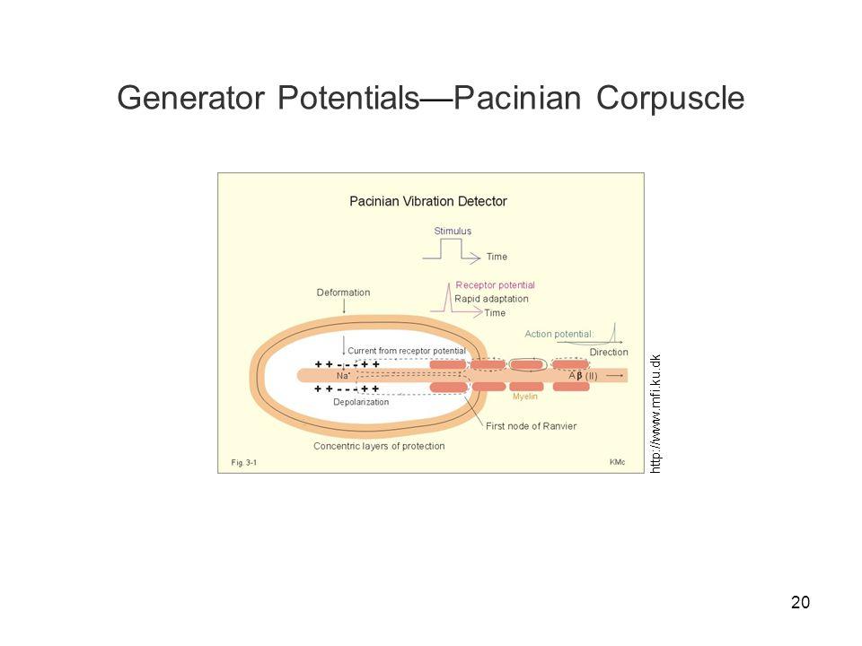 Generator Potentials—Pacinian Corpuscle