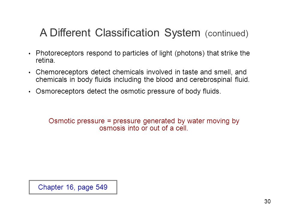 A Different Classification System (continued)