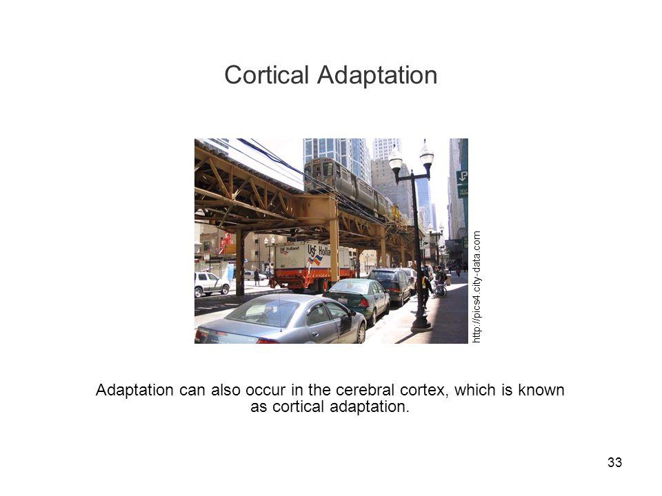 Cortical Adaptation http://pics4.city-data.com.