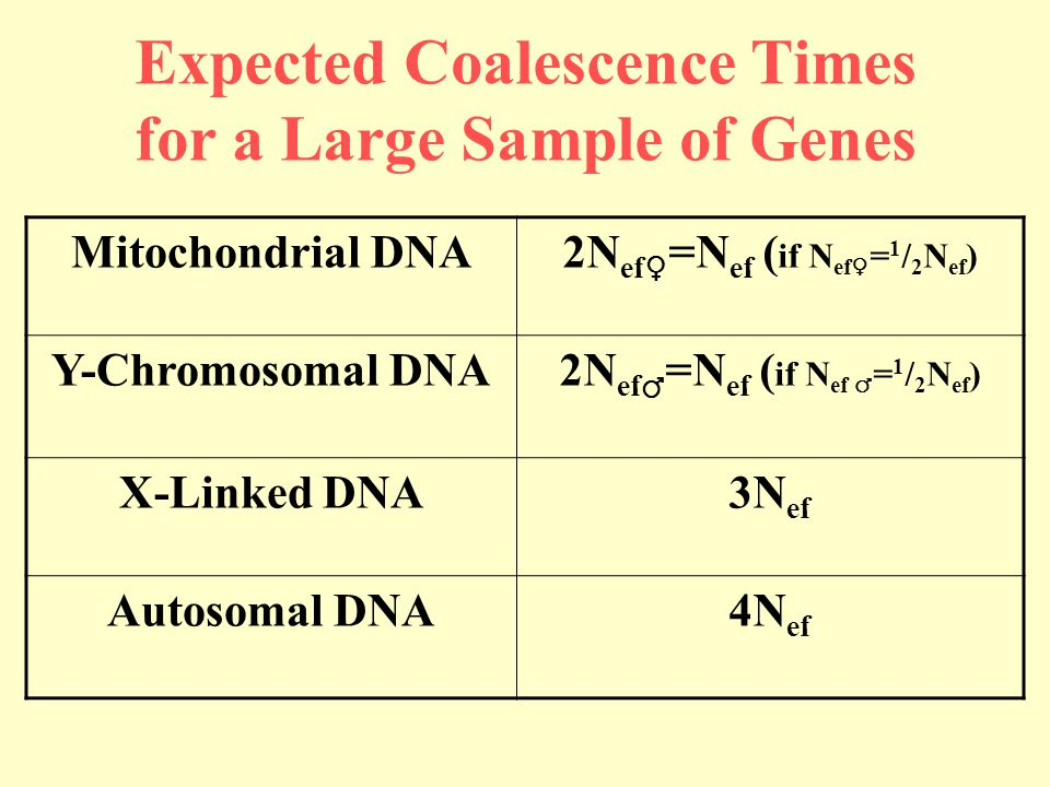 Expected Coalescence Times for a Large Sample of Genes