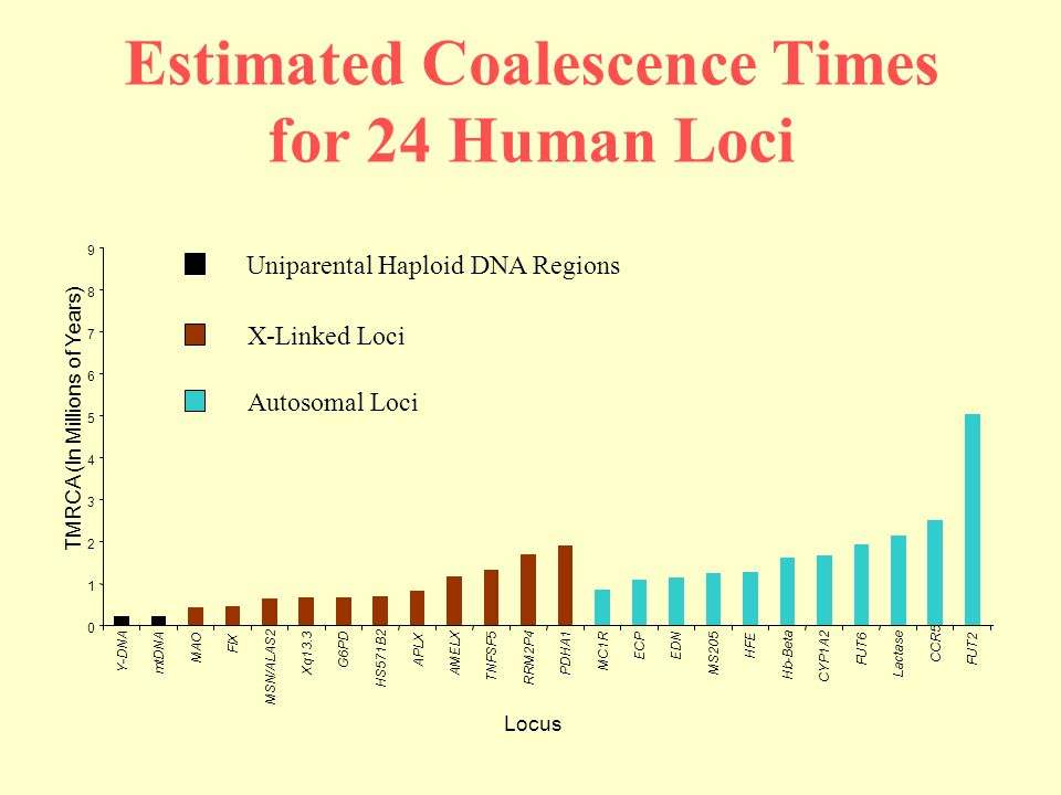 Estimated Coalescence Times for 24 Human Loci