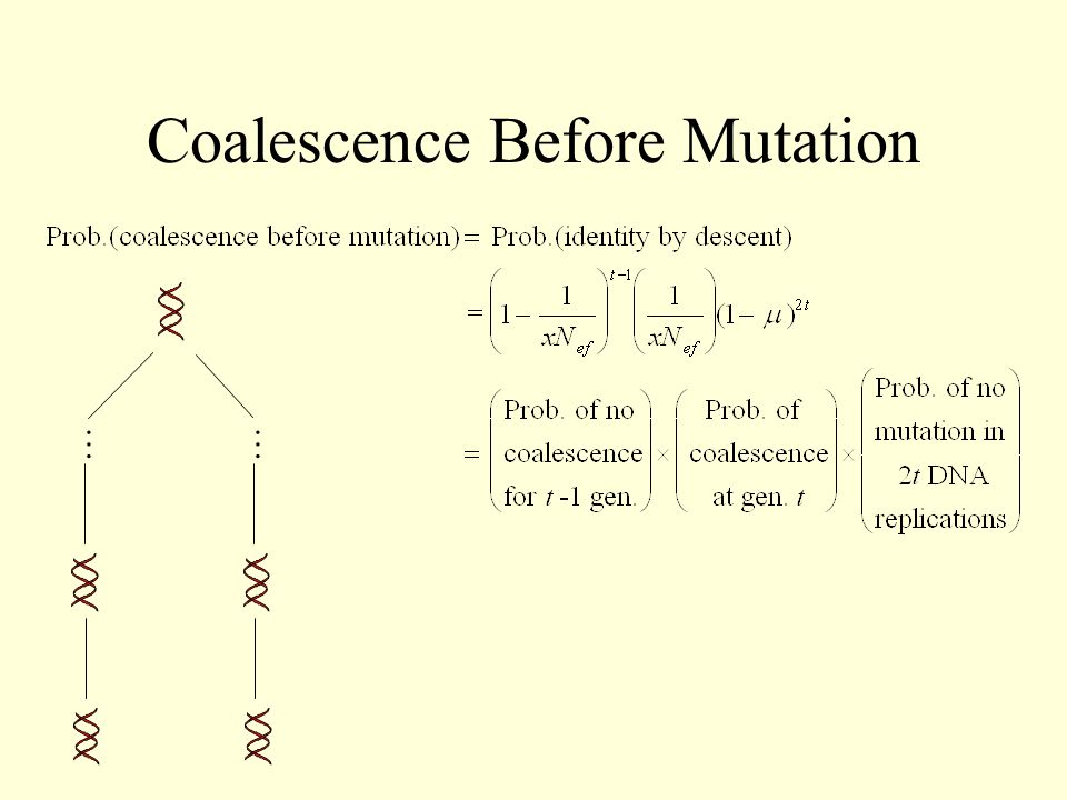 Coalescence Before Mutation