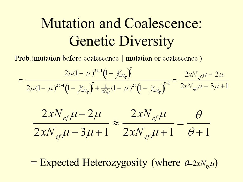 Mutation and Coalescence: Genetic Diversity