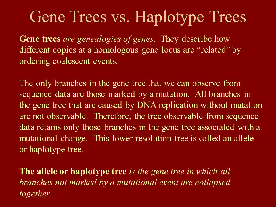 Gene Trees vs. Haplotype Trees