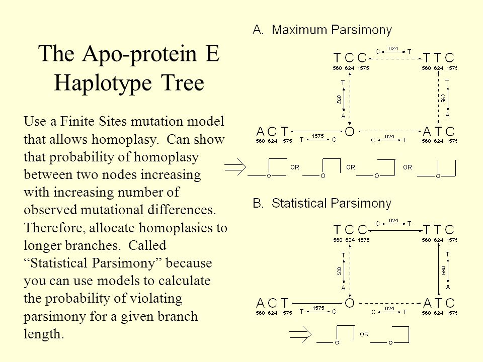 The Apo-protein E Haplotype Tree