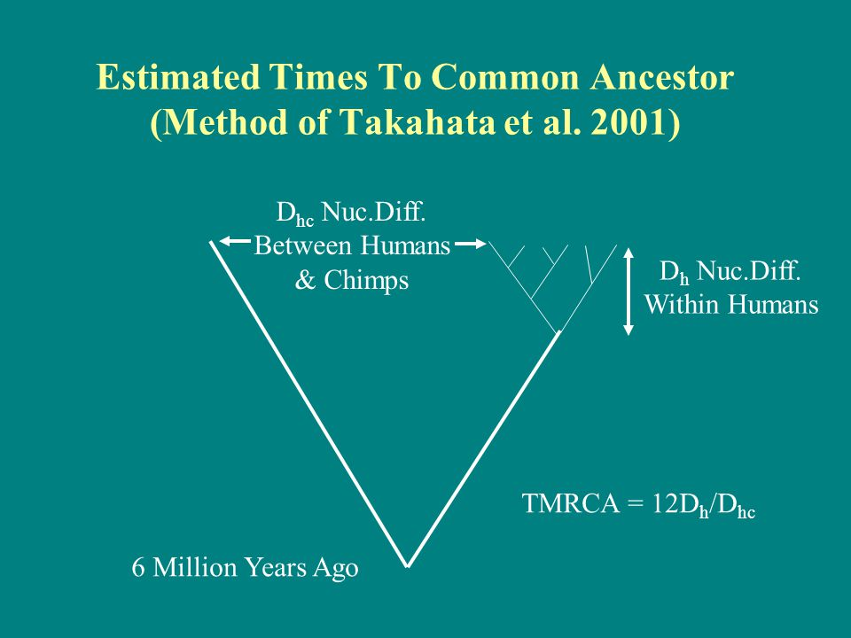 Estimated Times To Common Ancestor (Method of Takahata et al. 2001)