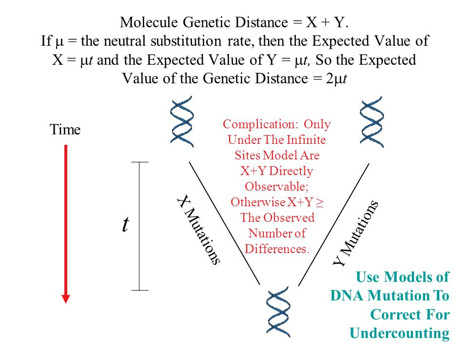 Molecule Genetic Distance = X + Y