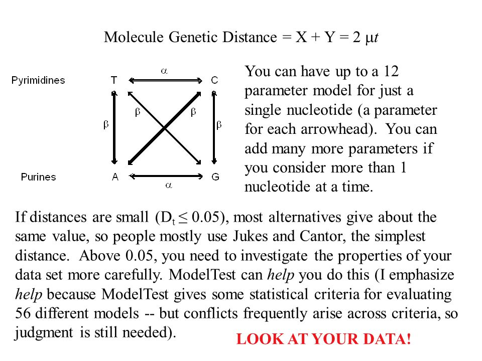 Molecule Genetic Distance = X + Y = 2 t