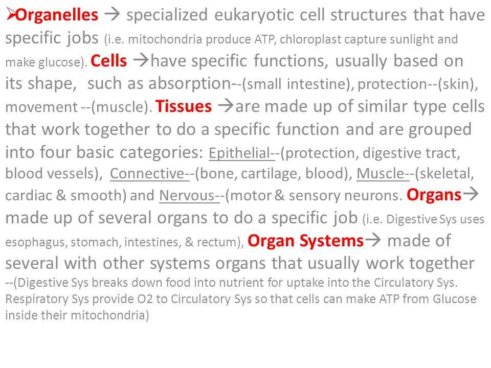 Organelles  specialized eukaryotic cell structures that have specific jobs (i.e.