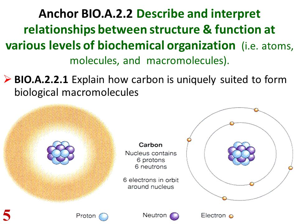 Anchor BIO.A.2.2 Describe and interpret relationships between structure & function at various levels of biochemical organization (i.e. atoms, molecules, and macromolecules).