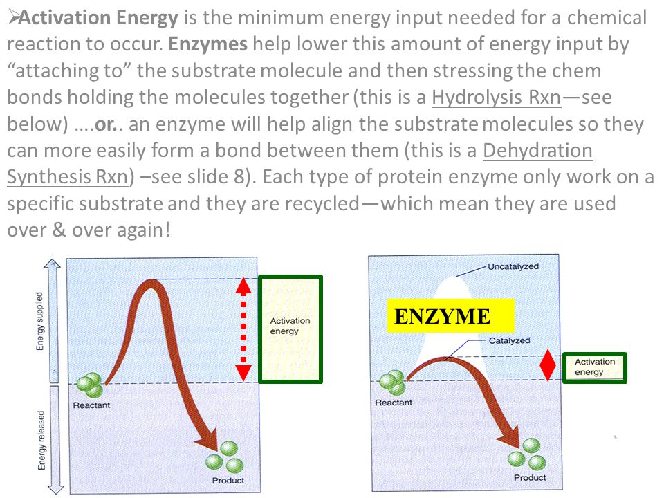 Activation Energy is the minimum energy input needed for a chemical reaction to occur. Enzymes help lower this amount of energy input by attaching to the substrate molecule and then stressing the chem bonds holding the molecules together (this is a Hydrolysis Rxn—see below) ….or.. an enzyme will help align the substrate molecules so they can more easily form a bond between them (this is a Dehydration Synthesis Rxn) –see slide 8). Each type of protein enzyme only work on a specific substrate and they are recycled—which mean they are used over & over again!