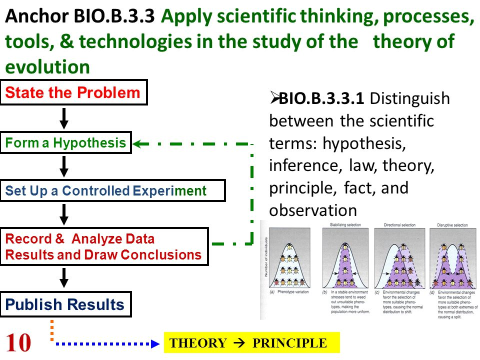 Anchor BIO.B.3.3 Apply scientific thinking, processes, tools, & technologies in the study of the theory of evolution