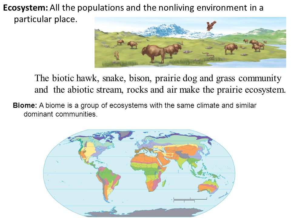 Ecosystem: All the populations and the nonliving environment in a particular place.
