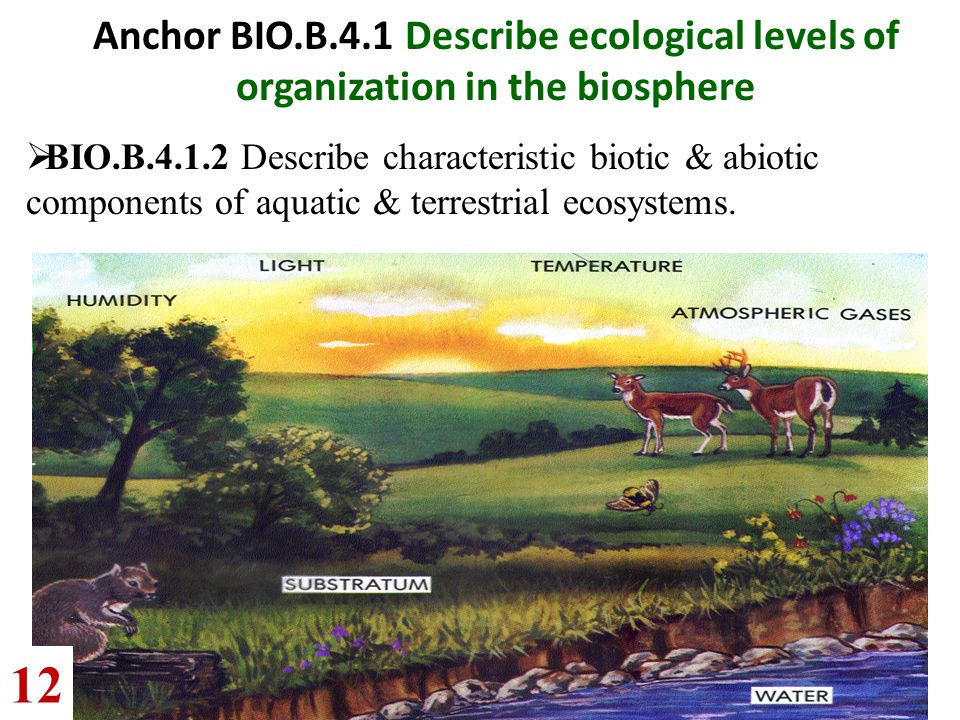 Anchor BIO.B.4.1 Describe ecological levels of organization in the biosphere