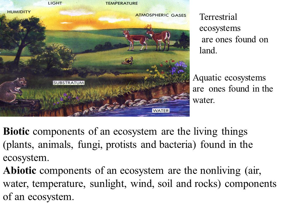 Biotic components of an ecosystem are the living things
