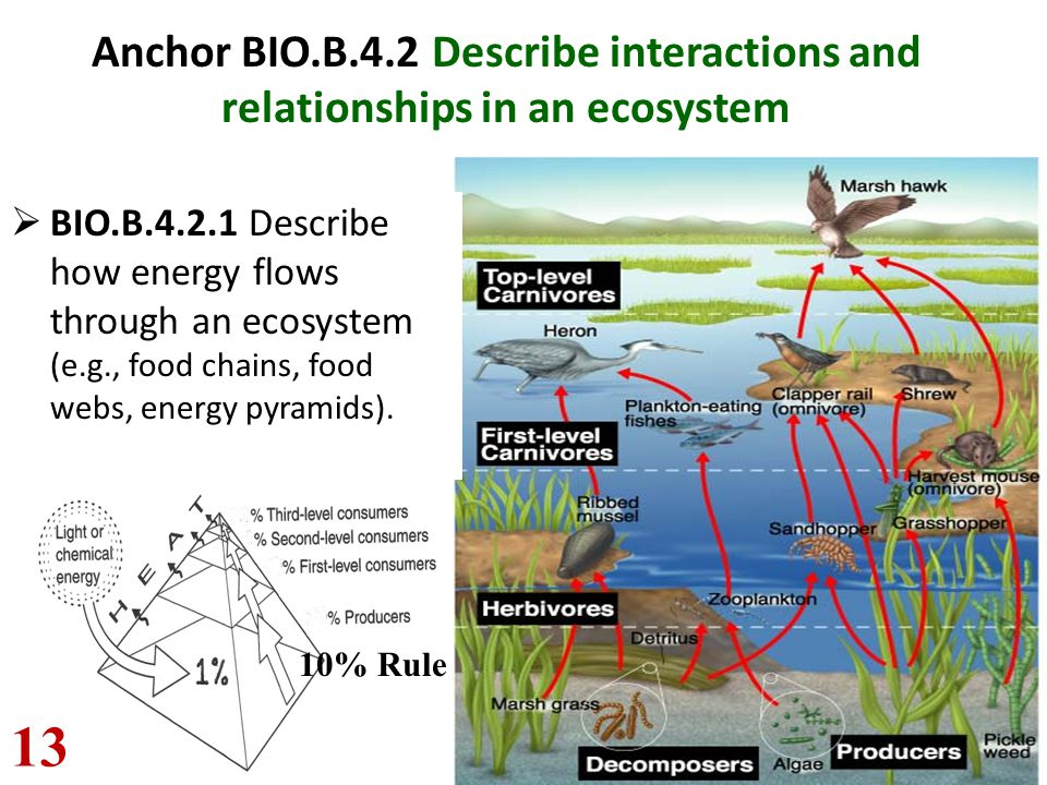 Anchor BIO.B.4.2 Describe interactions and relationships in an ecosystem