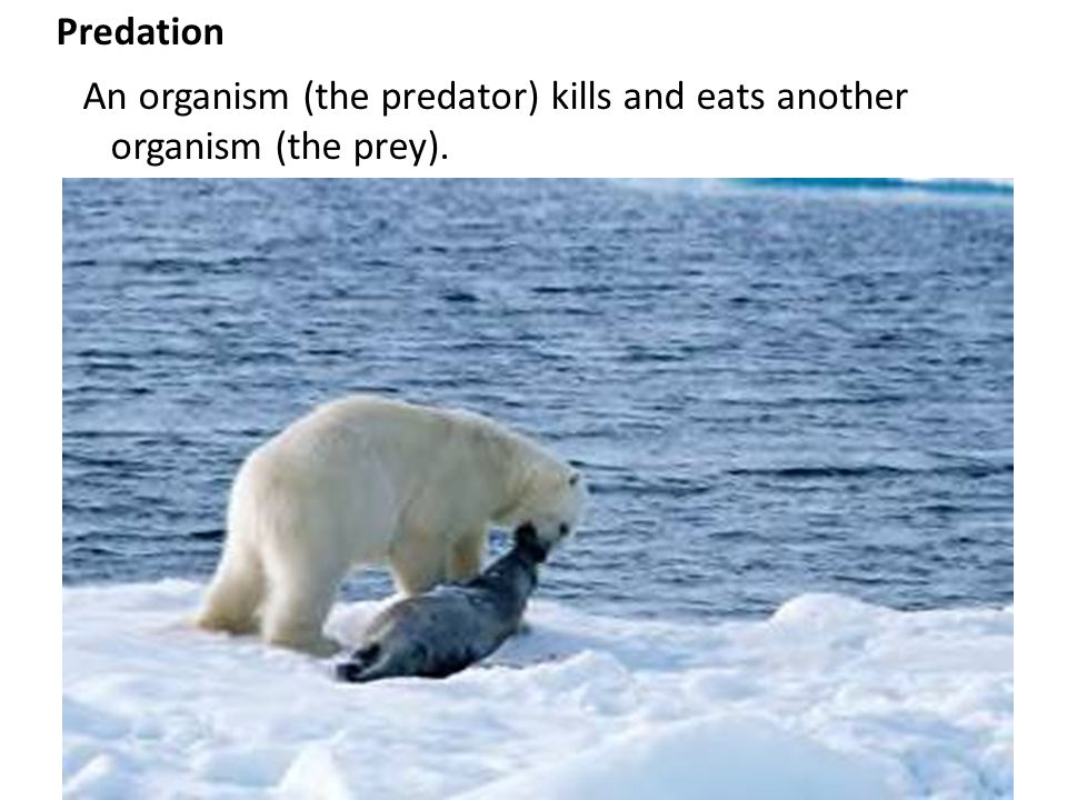 An organism (the predator) kills and eats another organism (the prey).