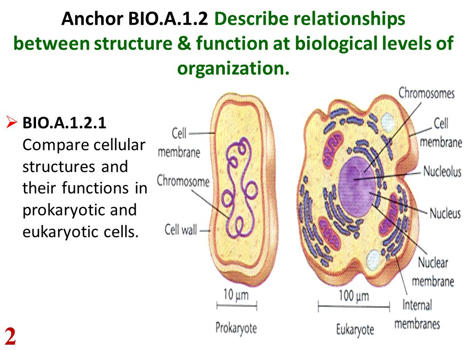 Anchor BIO.A.1.2 Describe relationships between structure & function at biological levels of organization.