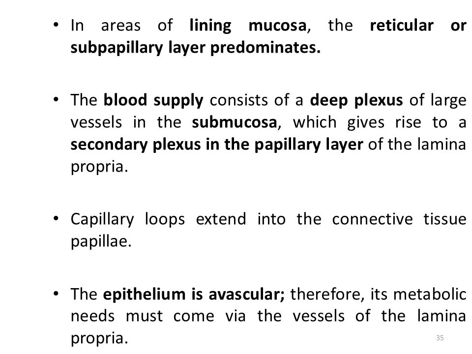 In areas of lining mucosa, the reticular or subpapillary layer predominates.