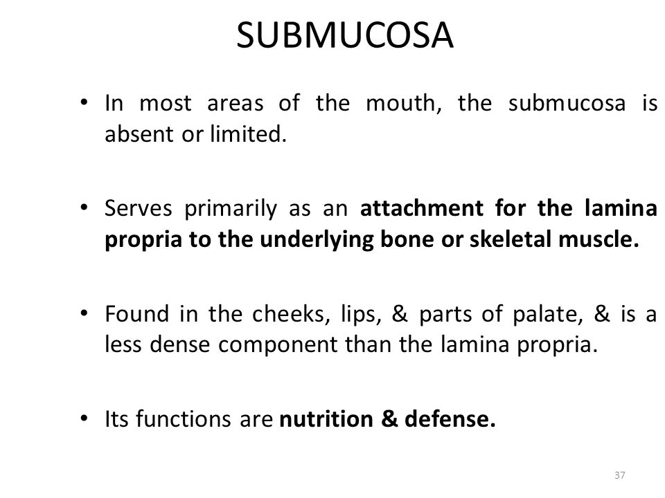 SUBMUCOSA In most areas of the mouth, the submucosa is absent or limited.