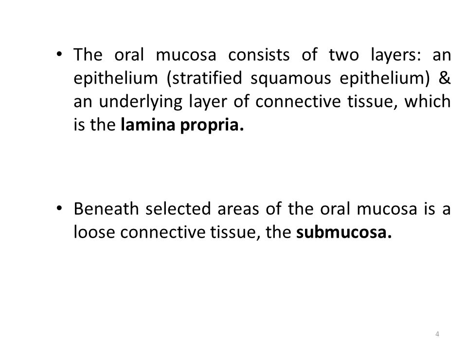 The oral mucosa consists of two layers: an epithelium (stratified squamous epithelium) & an underlying layer of connective tissue, which is the lamina propria.