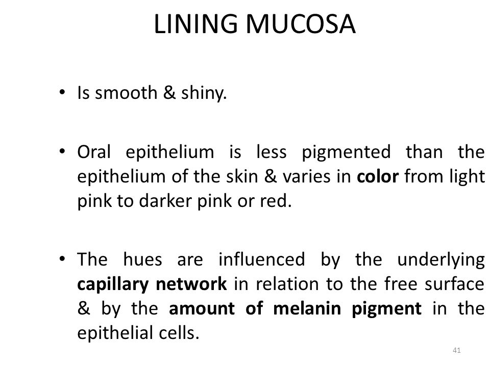 LINING MUCOSA Is smooth & shiny.