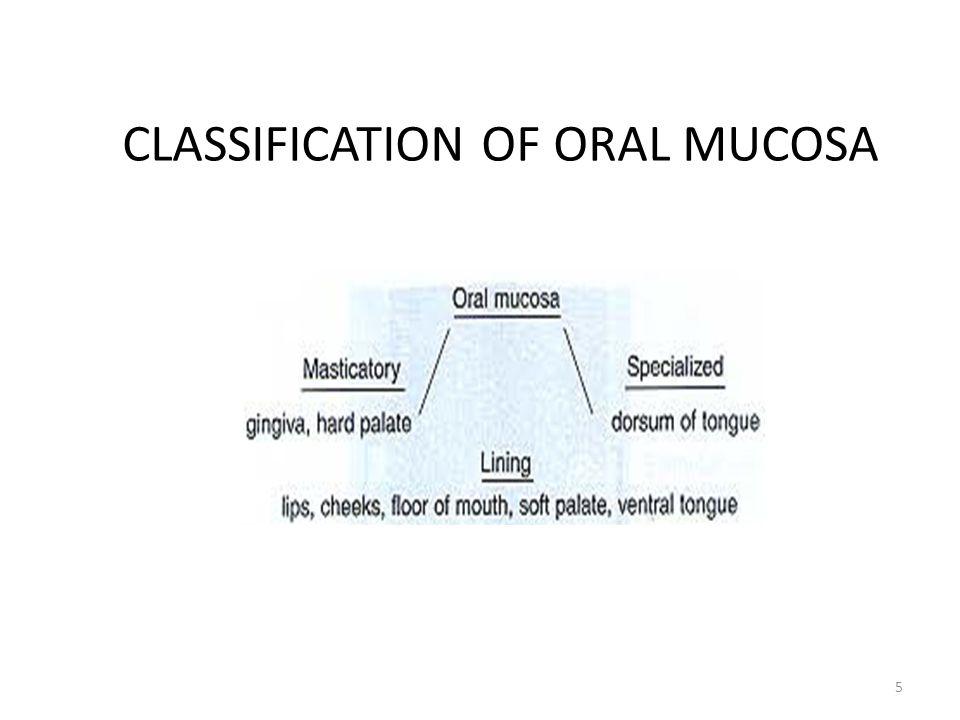 CLASSIFICATION OF ORAL MUCOSA