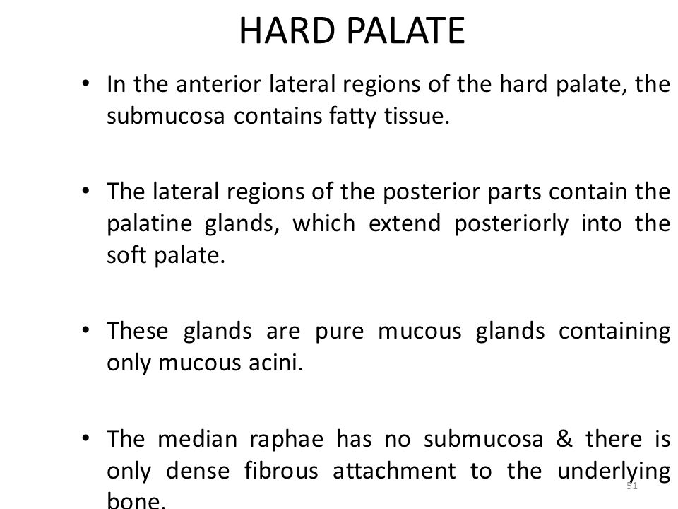 HARD PALATE In the anterior lateral regions of the hard palate, the submucosa contains fatty tissue.