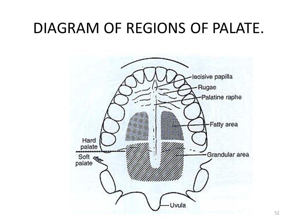 DIAGRAM OF REGIONS OF PALATE.