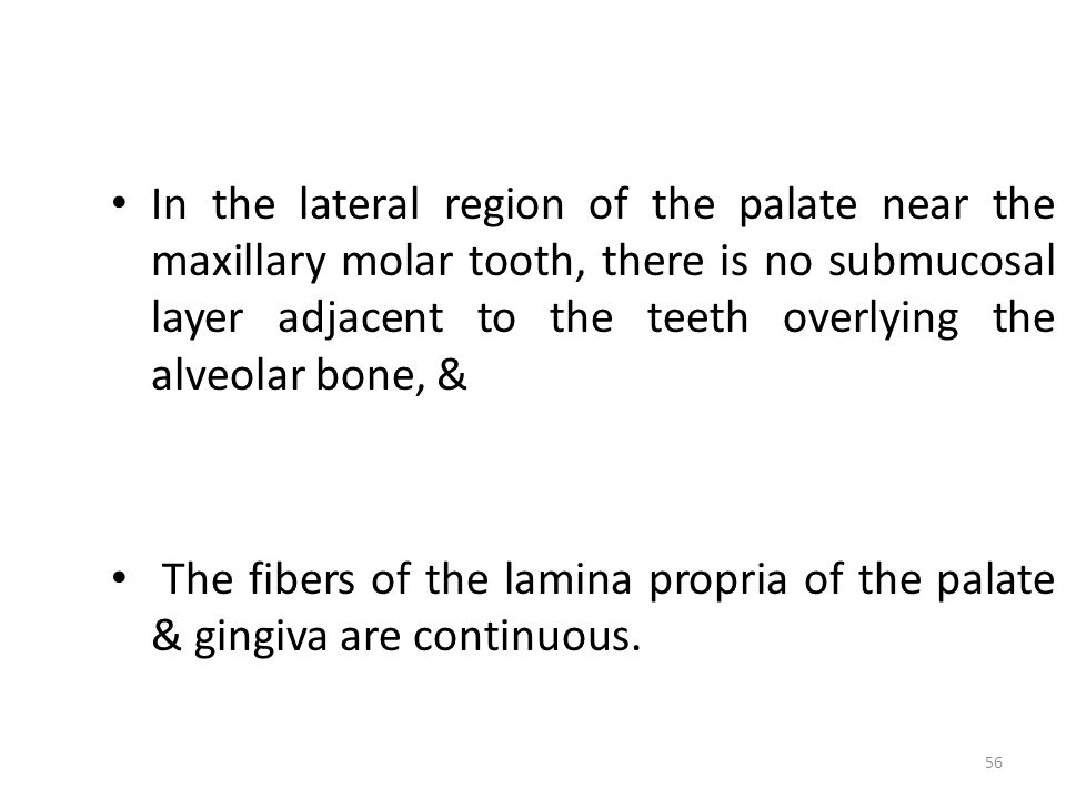 In the lateral region of the palate near the maxillary molar tooth, there is no submucosal layer adjacent to the teeth overlying the alveolar bone, &