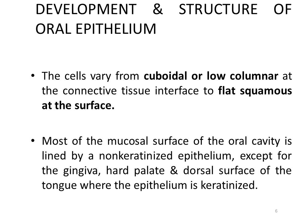 DEVELOPMENT & STRUCTURE OF ORAL EPITHELIUM