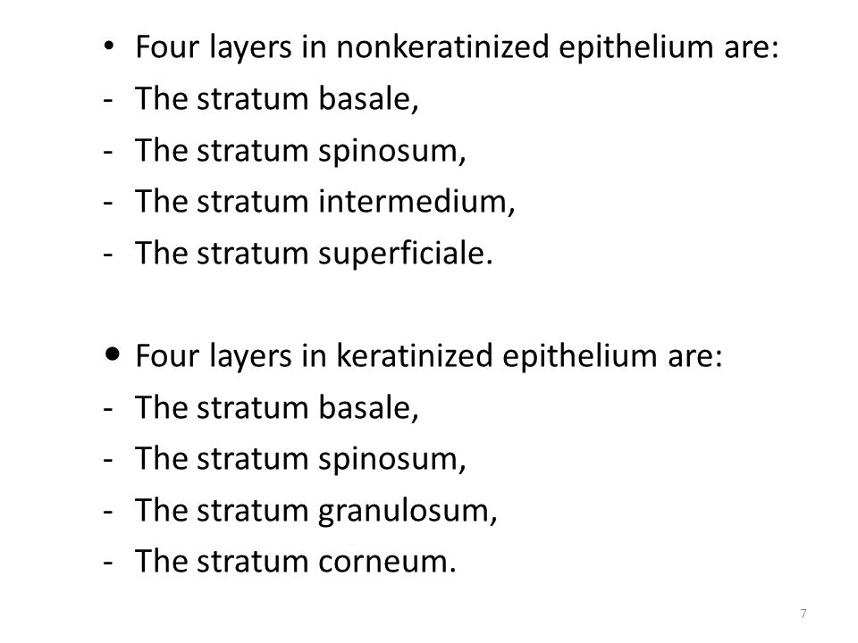 Four layers in nonkeratinized epithelium are: