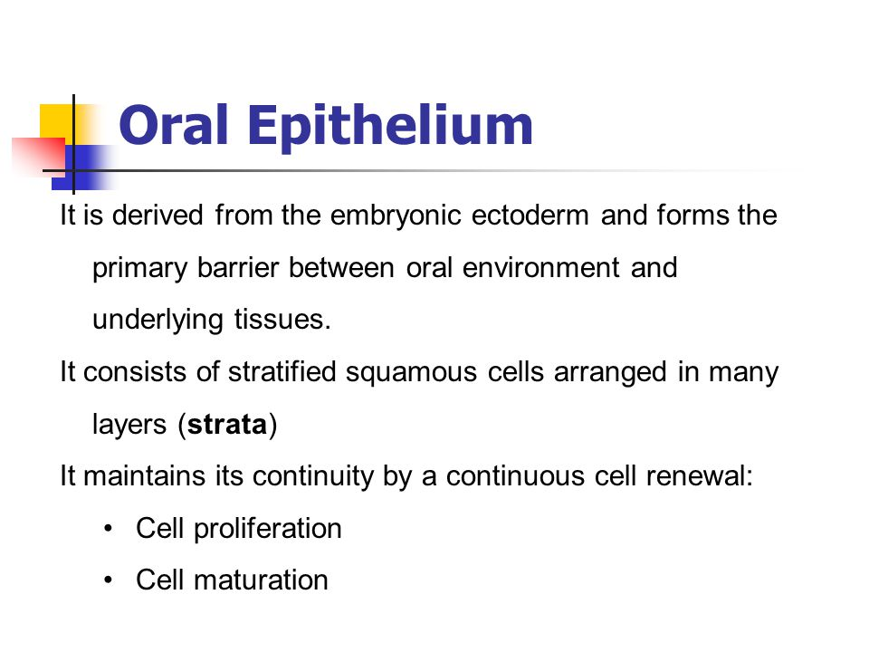 Oral Epithelium It is derived from the embryonic ectoderm and forms the primary barrier between oral environment and underlying tissues.
