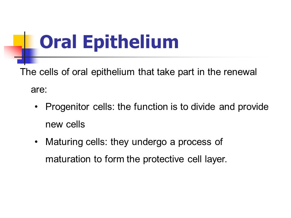 Oral Epithelium The cells of oral epithelium that take part in the renewal are: Progenitor cells: the function is to divide and provide new cells.